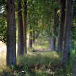Stock Photo: Shady path through trees in farmlands
