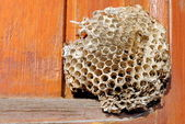 Empty bee hive on a wooden window — Stock Photo