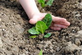 Kid hand with seedlings in the garden — Stock Photo