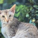 Big-eared cat — Stock Photo #10568481