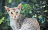 Big-eared cat — Stock Photo