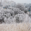 Stock Photo: Bushes and grass covered with frost