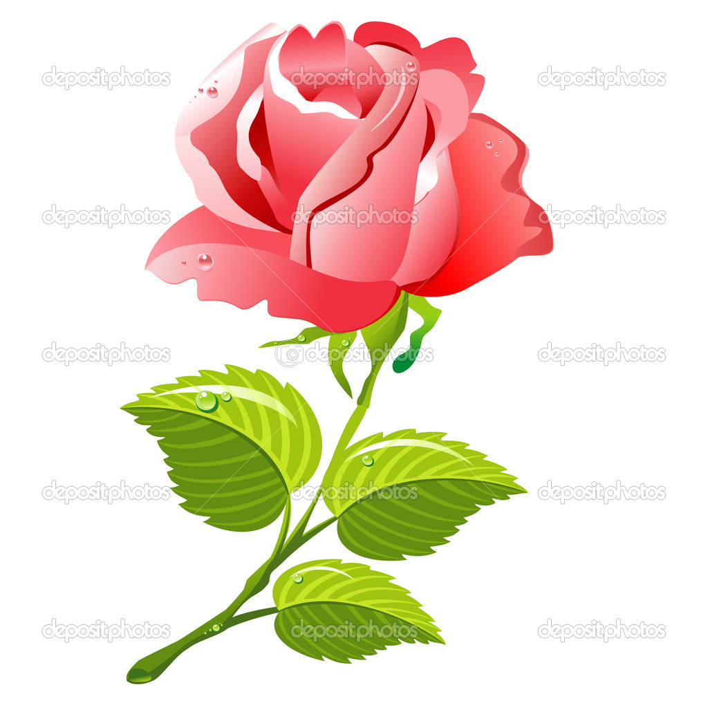 Vector pink rose: isolated illustration. — Stock Vector #8429131