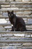 Czarny kot — Zdjęcie stockowe