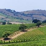 Постер, плакат: Maremma Tuscany vineyard
