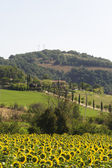 Landscape in Maremma (Tuscany) — Stock Photo