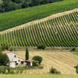Farm in Umbria — Stock Photo