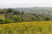 Landscape in Umbria near Todi — Stock Photo