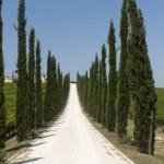 Farm in Umbria — Stock Photo #9009391