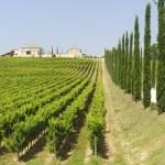 Farm in Umbria — Stock Photo #9051304