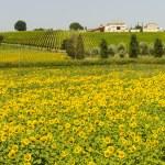 Farm in Umbria — Stock Photo #9232605