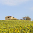 Farm in Val d'Orcia (Tuscany) — Stock Photo #9534824