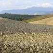 Landscape in Val d'Orcia (Tuscany) — Stock Photo #9673553