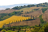 Famous winding road in Val d'Orcia — Stock Photo