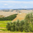 Landscape in Val d&#039;Orcia (Tuscany) - Stock Photo
