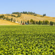 Farm in Val d&#039;Orcia (Tuscany) - Stock Photo
