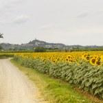 San Miniato (Tuscany) and sunflowers — Stock Photo
