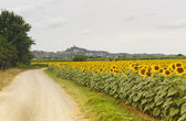 San Miniato (Tuscany) and sunflowers — Stock Photo