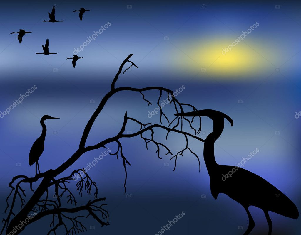 The figure shows the birds in the background of the night  Vettoriali Stock  #8769899