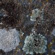Mosses and lichens early spring — Stock Photo