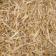 Straw Texture — Stock Photo #8462284