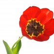Red tulips — Stock Photo #10195843
