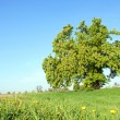 Stock Photo: Tree and blue sky