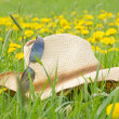 Flower meadow and hat with sunglasses — Stock Photo