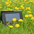 Stock Photo: Summer meadow and Tablet PC