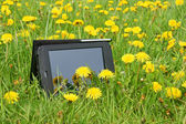 Summer meadow and Tablet PC — Stock Photo
