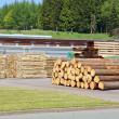 Stock Photo: Sawmill