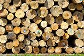 Troncos de árvore — Fotografia Stock