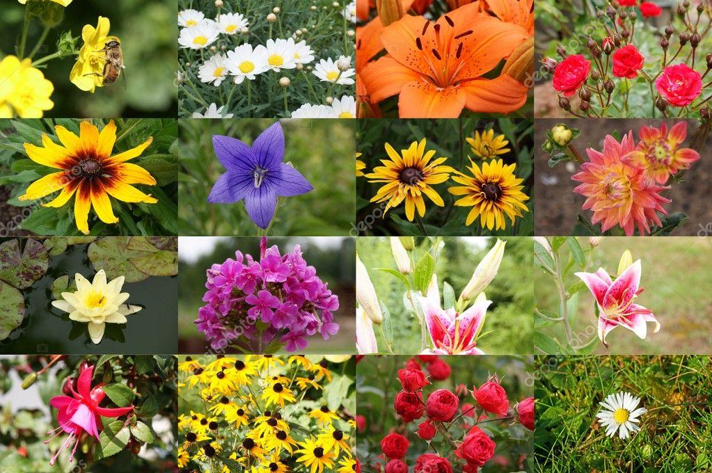 花卉拼贴画– 图库图片