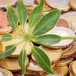Münzen und Pflanze — Photo