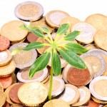 Münzen und Pflanze — Stockfoto
