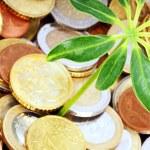 Münzen und Pflanze — Photo #8281457