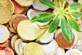 Münzen und Pflanze — Stock Photo