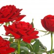 Red Roses — Stock Photo #8713262