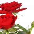 Red Roses — Stock Photo #8713356