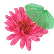Flower and Umbrella — Stock Photo #9033611