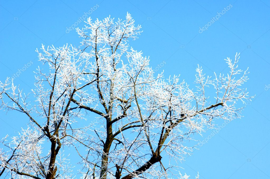 Tree in winter — Stock Photo #9167876