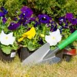 Gardening — Stock Photo #9615350