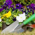 Gardening — Stock Photo #9615448