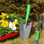 Gardening — Stock Photo #9633078