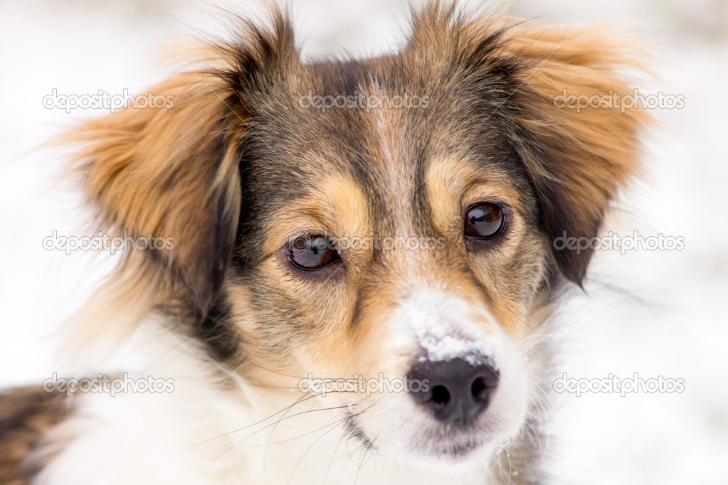Dog in the snow — Stock Photo #9664326