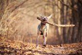 Dog playing — Stock Photo