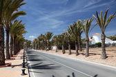 Road with palm trees in La Azohia, Region Murcia, Spain — 图库照片