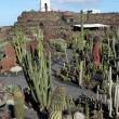 Cactus garden - Jardin de Cactus - on Lanzarote, Canary Islands, Spain - Stock Photo