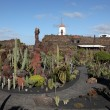Cactus Garden - Jardin de Cactus - on Canary Island Lanzarote, Spain. — Stock Photo