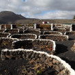 Vineyard in volcanic soil of Canary Island Lanzarote, Spain — Stock Photo